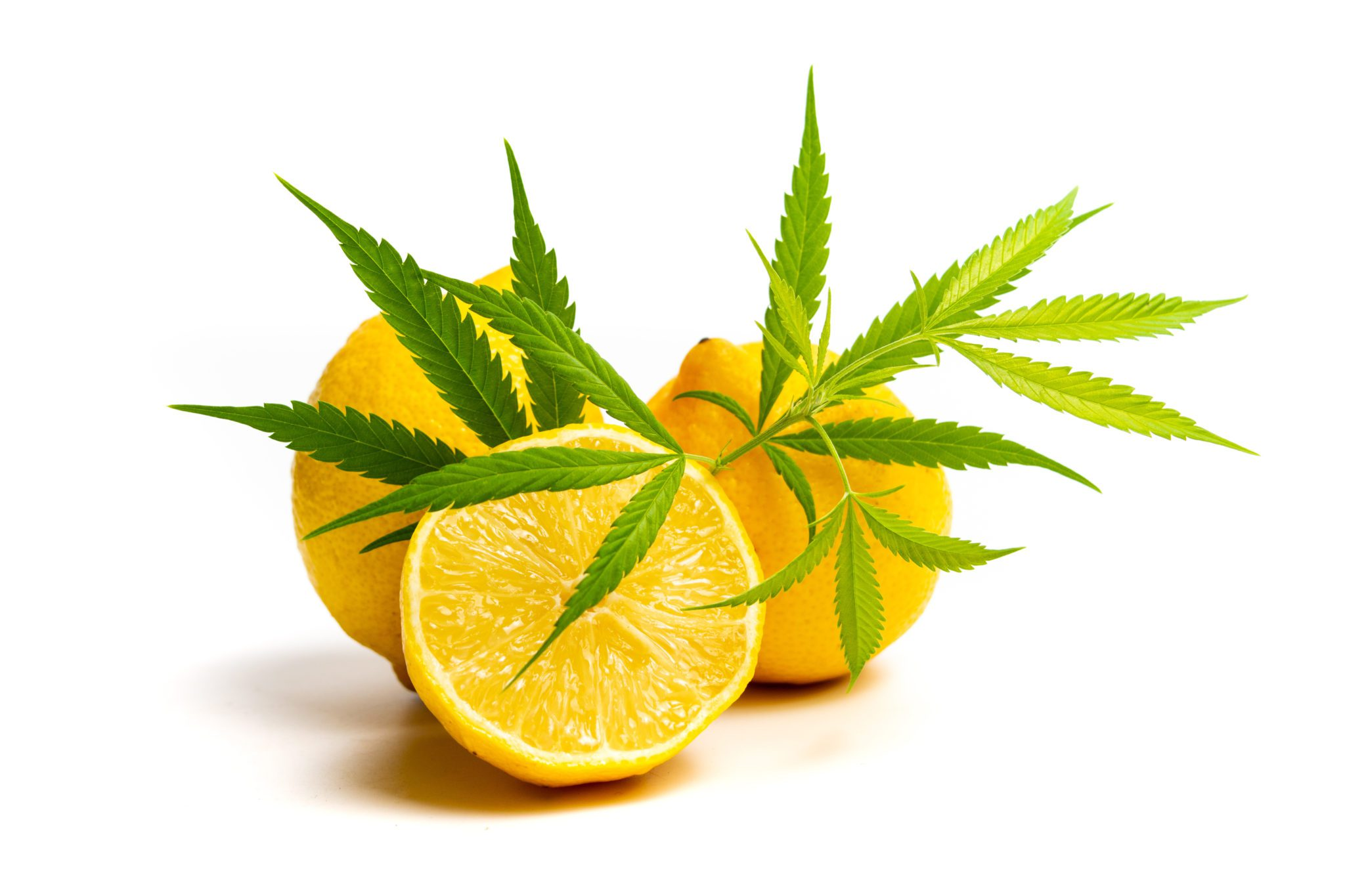 Marijuana leaf and lemon isolated